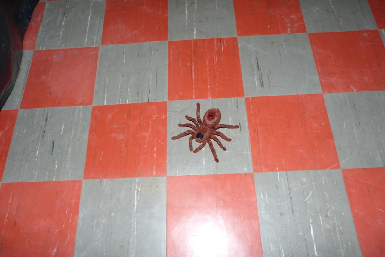 Mit einem lauten Knall stürzt die Spinne hinunter auf die Kinder - und krabbelt langsam wieder hoch